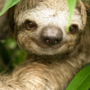 Your daily dosage of sloths