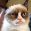 realgrumpycat: The Official Grumpy Cat™ Tumblr