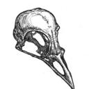 moenecropyromancer