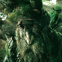 treebeard-the-anarchist