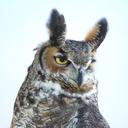 Lotsandlotsofbirds:  Frosty-Mage:  Aviaryattorney:  Snazzy New Trailer And Release