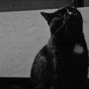 pipcat5499
