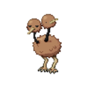 daily-doduo