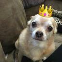 im-a-fucking-pretty-princess
