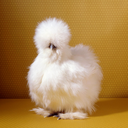 the-chicken-art-sideblog