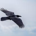 birdkin-haven-blog