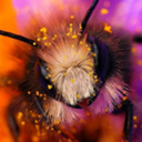 aureaimperatrix