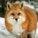 foxsuggestions-blog