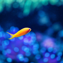 little-loner-fish