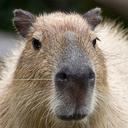 thisiscapybaraprivilege