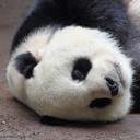 pandasexplosion