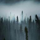 local-mist
