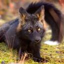 foxandlaurels