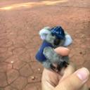 koaladoingthings