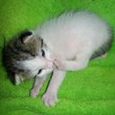 kitten-little-blog