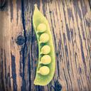 greenpatio