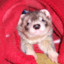 cannonball-the-ferret: Cannonball the Ferret