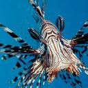 galeforcefish