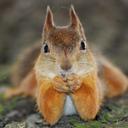 redsibsquirrel