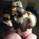 omg-snakes