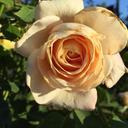 sophrosie-blog