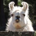 the-amazing-llama