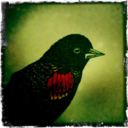belletristcoterie-blog-blog