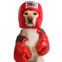 doggofight