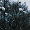 melancholic-tendencies