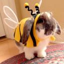 littlebunnybee