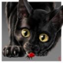 le-noir-chaton