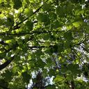 leafsunglow-blog
