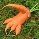 sentient-carrot