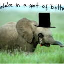 The Wonderful Misadventures of a Small Elephant