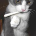 friendly-cat-blog