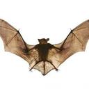 glittery-fruit-bat-blog