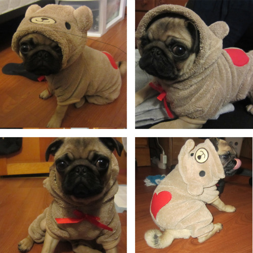 Meet the many adorable faces of Buster the Pug-Bear! (submitted by fjennifer!) And see our new discounted t-shirts!