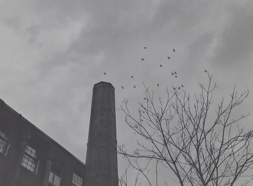 Old Industrial Chimney and Birds (Toronto, Canada. Gustavo Thomas © 2013) on Flickr.