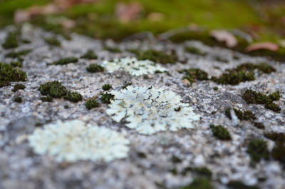 hikereyes:  FOTO FLASHBACK - Nov. 23, 2012 -Lichen on stone on Bear Canyon trail. by HikerEyes