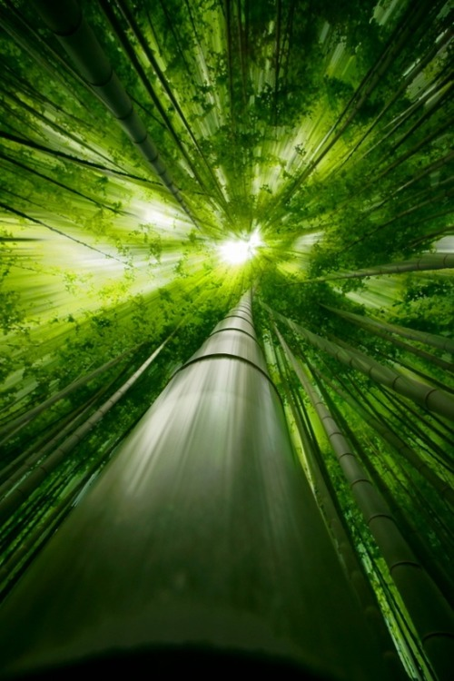 nolan-thealphafish:  electric-voltage: Bamboo forest in Japan: photo by Takeshi Marumot