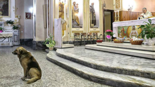 Dog attends Mass daily where owner's funeral was held     Each day when the bells ring to mark the start of services, this German shepherd makes his way inside an Italian church — just as he did when his master was alive.