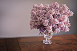 Lilacs at Mother's house. 2013.