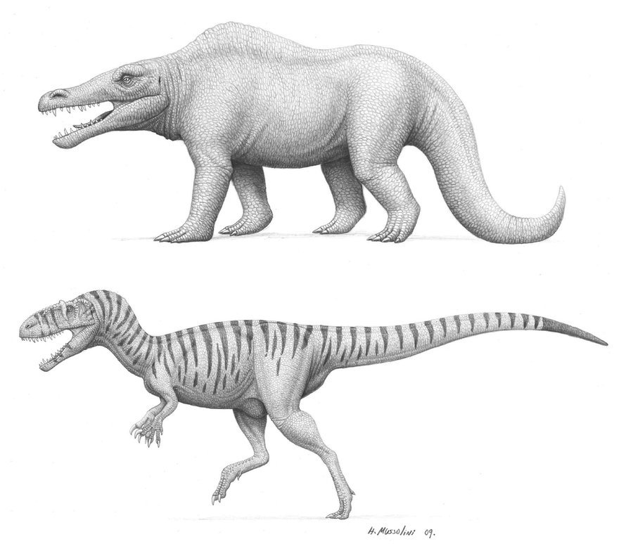 "Megalosaurus, past and present, by Heraldo Mussolini: ""I always wanted to do something with vintage dinosaurs, so I drew two versions of the same dinosaur, the old quadruped reconstruction above, and the modern bipedal one below."""