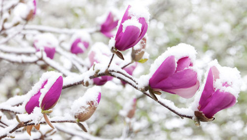 mothernaturenetwork:     Nature adapts to shifting seasons      The natural world is already adapting to changes in the seasons, with evidence from the United States that spring is steadily advancing the time of its arrival.