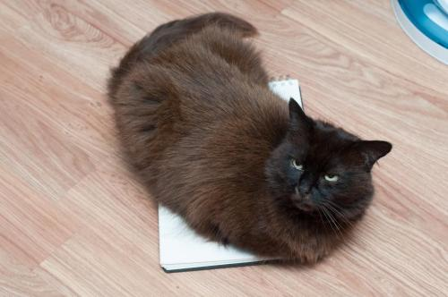 "catsbeaversandducks:  ""No."" Photo by ©DoodleCats  On ur notepad. U gotta problem?"