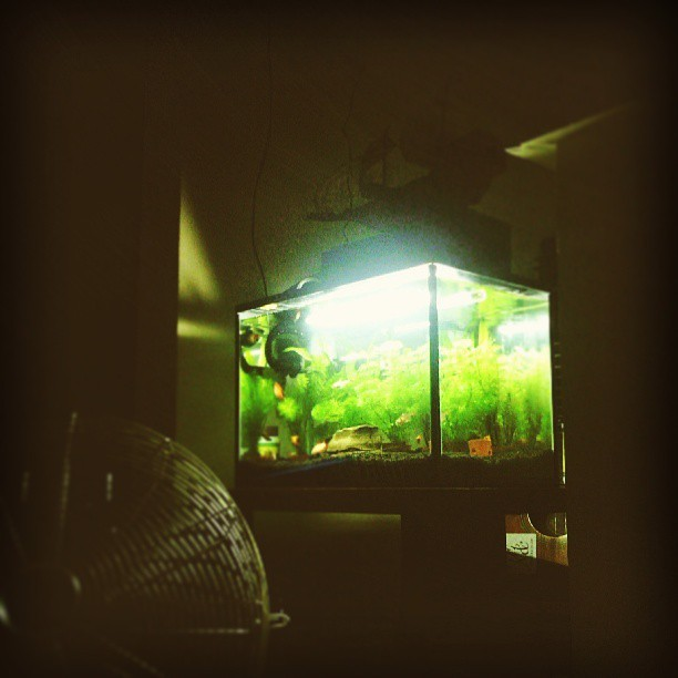 @imogenacreative #aquarium #refresh #gosleep