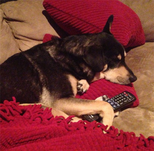 """I REALLY would like to change the channel but I don't want to disturb this…"" -Charles Trippy"