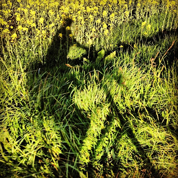Bike ride #bretagne #printemps #spring  (at Minihic Sur Rance)