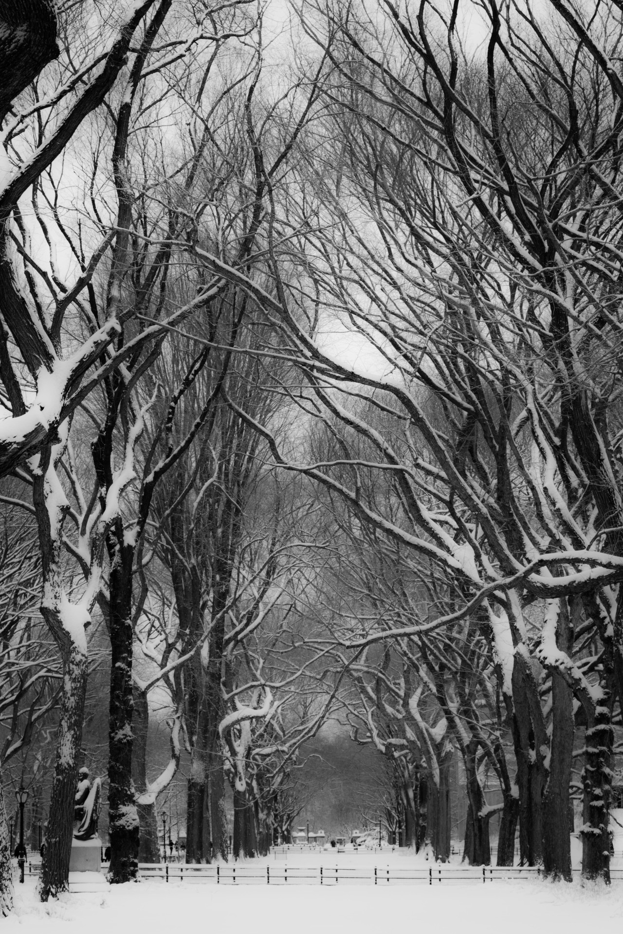 lensblr-network:  Winter Scene #5: Near Poet's Walk, Central Park.On either side of Poet's Walk there are stands of trees (American Elms?) that form vaulting, interlocking branches. This is the east side stand. #2 is the west side stand. Poet's Walk itself exhibits the same effect and is often photographed but I think these two stands are finer.  by Ric Camacho  (riccamacho.com)