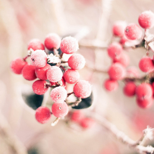 simple-pretty-things:  Warm Words On A Cold Day by Ciel Photography on Flickr.